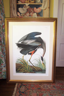 Archival Framing By Antique Nature Prints